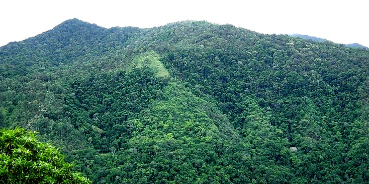 A mountain covered in rainforest
